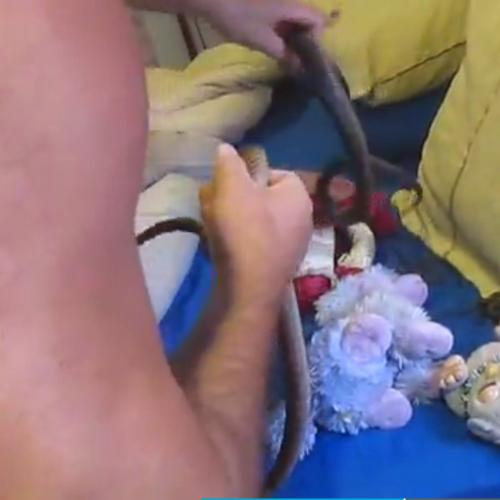 The Moment Multiple Deadly Snakes Found Under Girl's Pillow