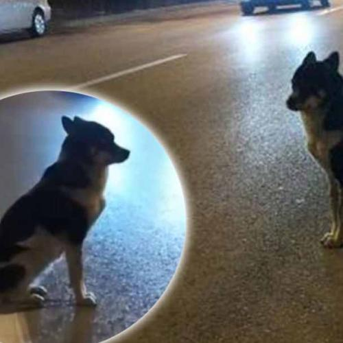 Dog Waits Three Months For Dead Owner To Return