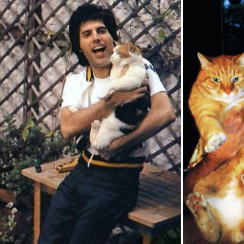 12 Adorable Pictures Of Freddie Mercury With His Pet Cats