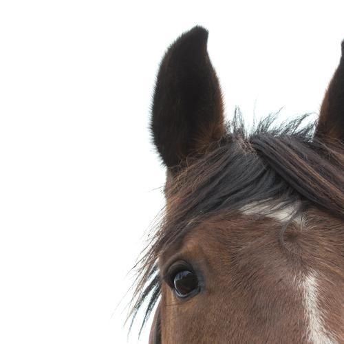 Watch This Horse Actually Gallop Into A Bar