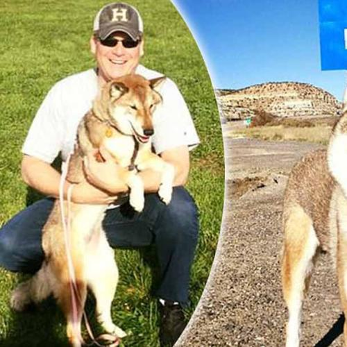 Man Takes Dog Dying of Cancer On Trip Of A Lifetime