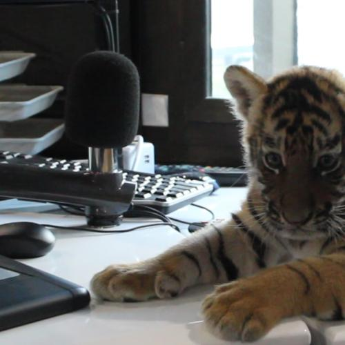 Gary And Mark Gush Over Baby Dreamworld Tiger Cubs In Studio