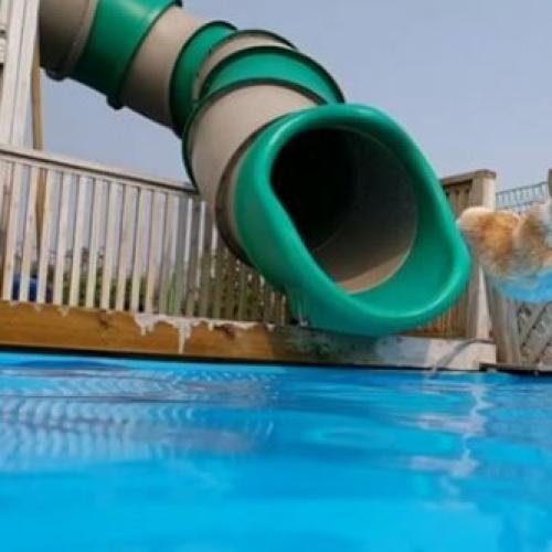 This Corgi On A Waterslide Has Us Longing For Summer