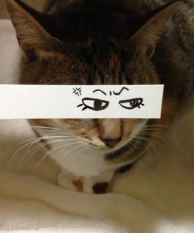 http://kotaku.com