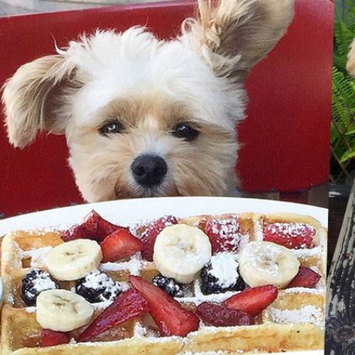 Meet Popeye, The Puppy Who Won Instagram