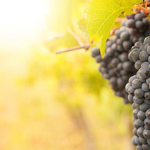 Red wine has some anti-obesity properties