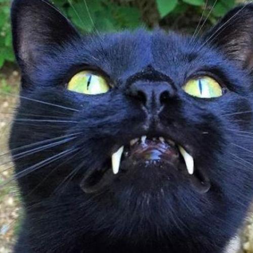 This Rescue Cat Looks Half Vampire!