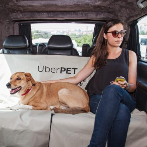 Uber Has Launched A Pet-Friendly Service Called Uber Pet