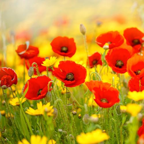 We Will Remember Them: An Interview With Australian War Historian Mat McLachlan