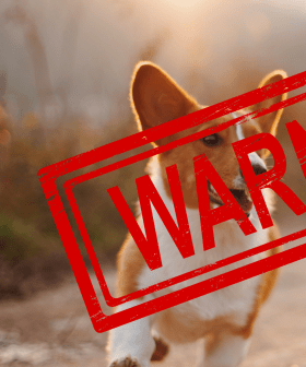 'Check Regularly' - Dog Owners Warned As Deadly Disease Starts Spreading Across Australia
