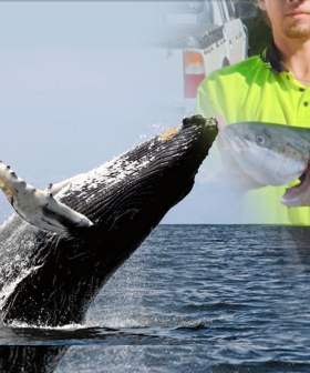 Help Nick Price, The Teenager Who's In Critical Condition After A Whale Breached On His Small Boat