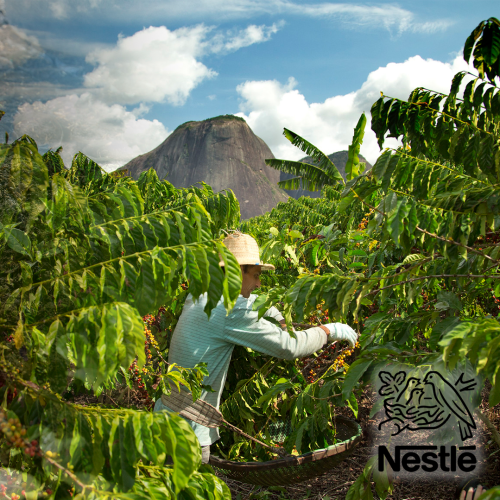 """Food Giant Nestlé Introduce A New """"Living Income Program"""" And Commit To Regenerative Agricultural Practices!"""
